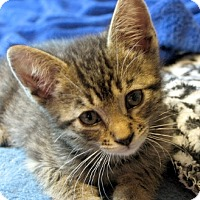 Adopt A Pet :: Orville - Davis, CA