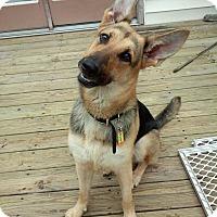 German Shepherd Dog Dog for adoption in Columbus, Ohio - Kennedy