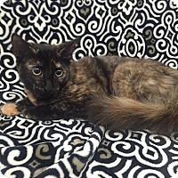 Adopt A Pet :: Ruby Dee - Highland Park, NJ