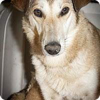 Collie Mix Dog for adoption in Poland, Indiana - Penny