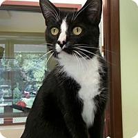 Adopt A Pet :: Sam - Shinnston, WV