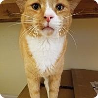 Adopt A Pet :: Poe - Alpharetta, GA