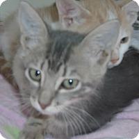 Adopt A Pet :: Cotton - Georgetown, TX