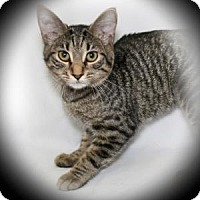 Adopt A Pet :: Twister - Bradenton, FL