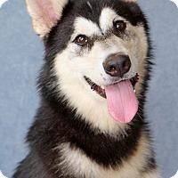 Adopt A Pet :: Vladimir - Encinitas, CA