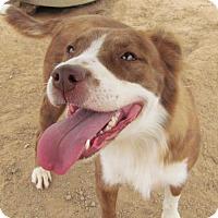 Adopt A Pet :: Kia - San Tan Valley, AZ