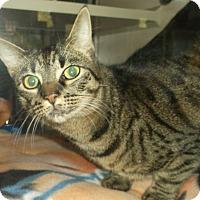 Adopt A Pet :: AZURA - Gloucester, VA