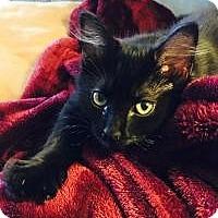 Adopt A Pet :: Bitty - Franklin, WV