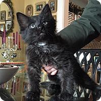 Adopt A Pet :: Pigpen - Staten Island, NY