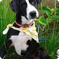 Adopt A Pet :: ROSIE - Corona, CA