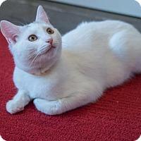 Adopt A Pet :: Heather McNamara - New York, NY