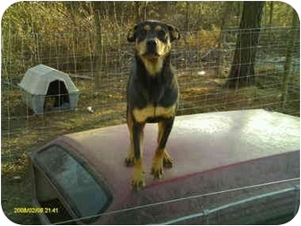 Rottweiler Mix Dog for adoption in Emory, Texas - Whiskey
