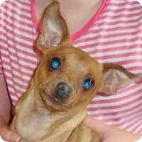Adopt A Pet :: Chico - Leesport, PA