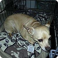 Adopt A Pet :: Taco - Dayton, OH