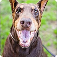 Adopt A Pet :: Zorro - Santee, CA