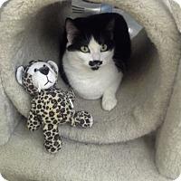 Adopt A Pet :: Priscilla - San Jose, CA