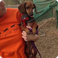 Adopt A Pet :: Frankie - Santa Rosa, CA