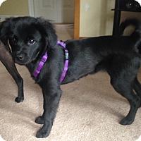 Adopt A Pet :: Sophie - Huntsville, ON