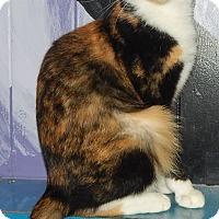 Adopt A Pet :: Addison - Holden, MO