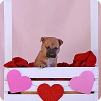 Adopt A Pet :: Russ - Waldorf, MD