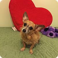 Adopt A Pet :: Freckles - Schaumburg, IL