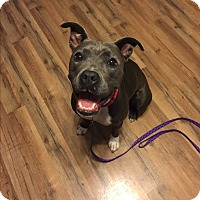 Adopt A Pet :: Dierdre- FOSTER NEEDED! - Oak Ridge, NJ