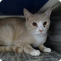 Adopt A Pet :: Fumbles - Elyria, OH