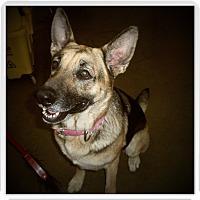 Adopt A Pet :: DAISY - Medford, WI