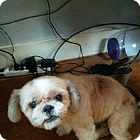 Adopt A Pet :: Sasha - Willingboro, NJ