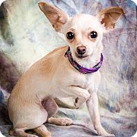 Adopt A Pet :: PIA - Anna, IL