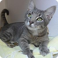 Adopt A Pet :: Trinity - Manning, SC
