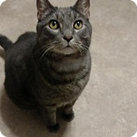 Adopt A Pet :: Rex - Hanna City, IL
