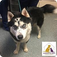 Adopt A Pet :: Luca - Eighty Four, PA
