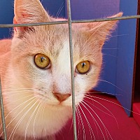 Adopt A Pet :: CHRISTAIN - Ocala, FL