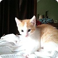 Adopt A Pet :: Julius - Omaha, NE