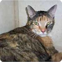 Adopt A Pet :: Cheyenne - Scottsdale, AZ