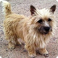 Adopt A Pet :: Stevie - Gilbert, AZ