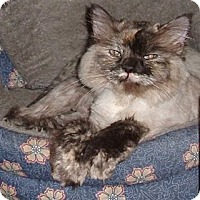 Adopt A Pet :: McKenna - Acworth, GA