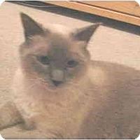 Adopt A Pet :: Xena - Mesa, AZ