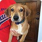 Adopt A Pet :: Addie