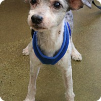 Adopt A Pet :: Duncan - North Olmsted, OH