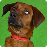 Adopt A Pet :: Mac - Minneapolis, MN