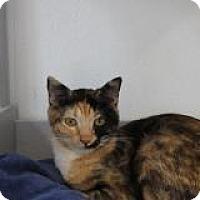 Adopt A Pet :: Bloomingdale - El Cajon, CA
