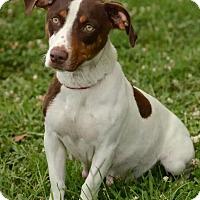 Adopt A Pet :: Claudine - Charlemont, MA