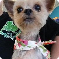 Adopt A Pet :: Coco - Gainesville, FL