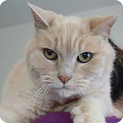 Photo 3 - Domestic Shorthair Cat for adoption in Berkeley, California - Homer