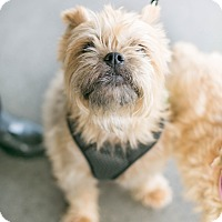 Adopt A Pet :: Truffles - Los Angeles, CA