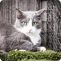 Adopt A Pet :: Glenora - Chicago, IL