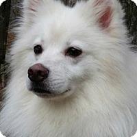Adopt A Pet :: Murphy - Canterbury, CT