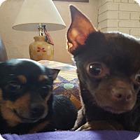 Adopt A Pet :: Cookie Crumbs & Minnie Mae - Rockford, IL